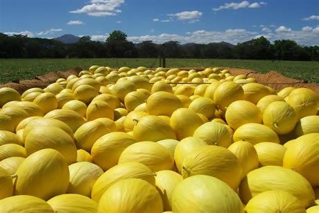 Costa Rican melon campaign kicks off